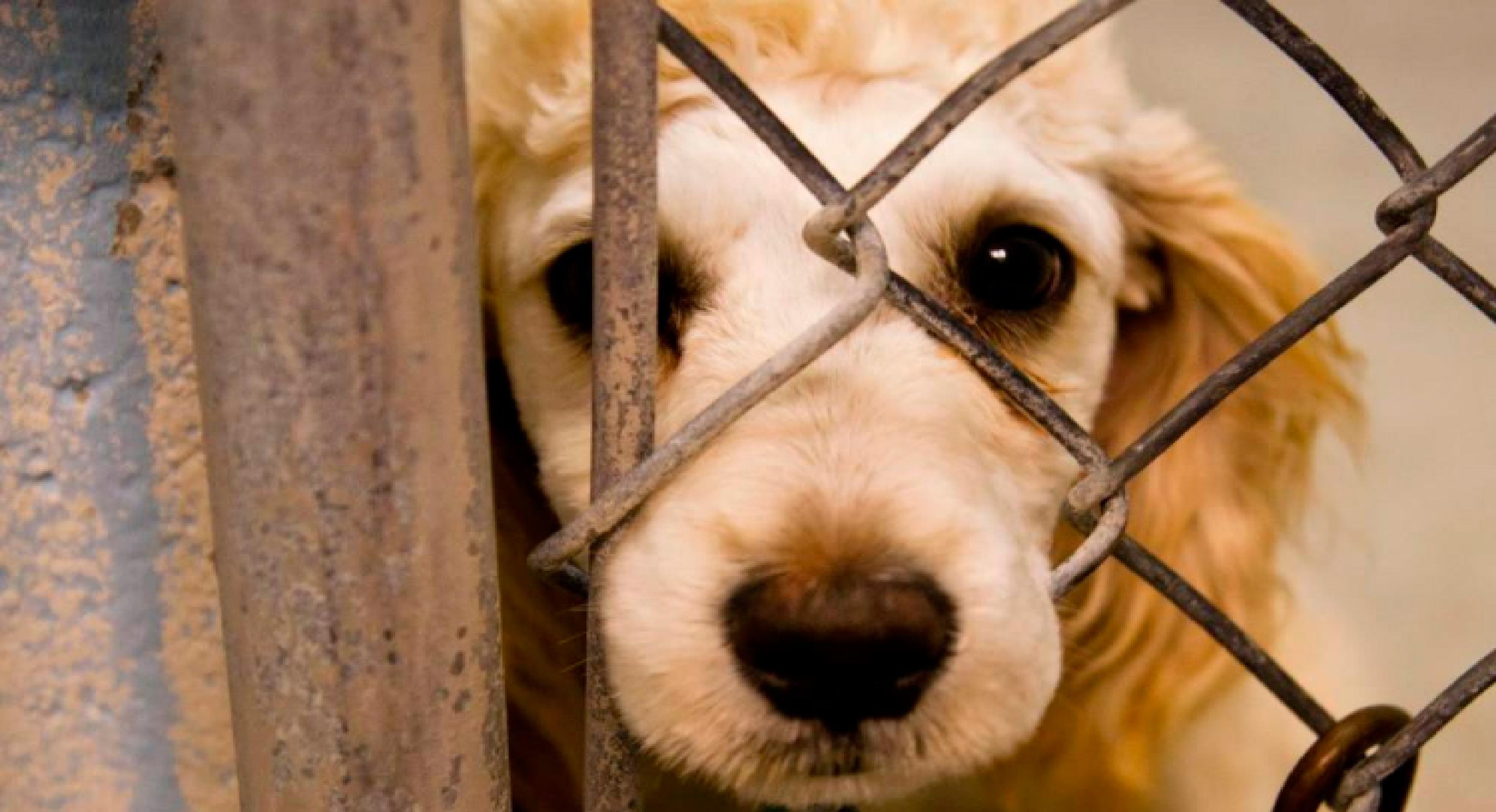 Plantean aumentar pena a agresores de maltrato animal