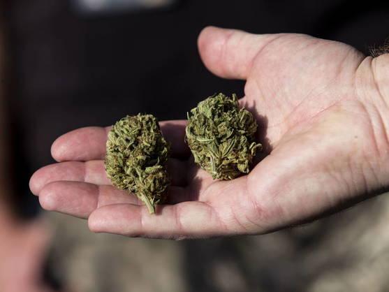 aprueban-dictamen-sobre-uso-de-la-marihuana