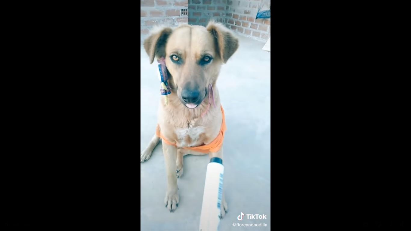 (Video) Perro matemático asombra las redes sociales