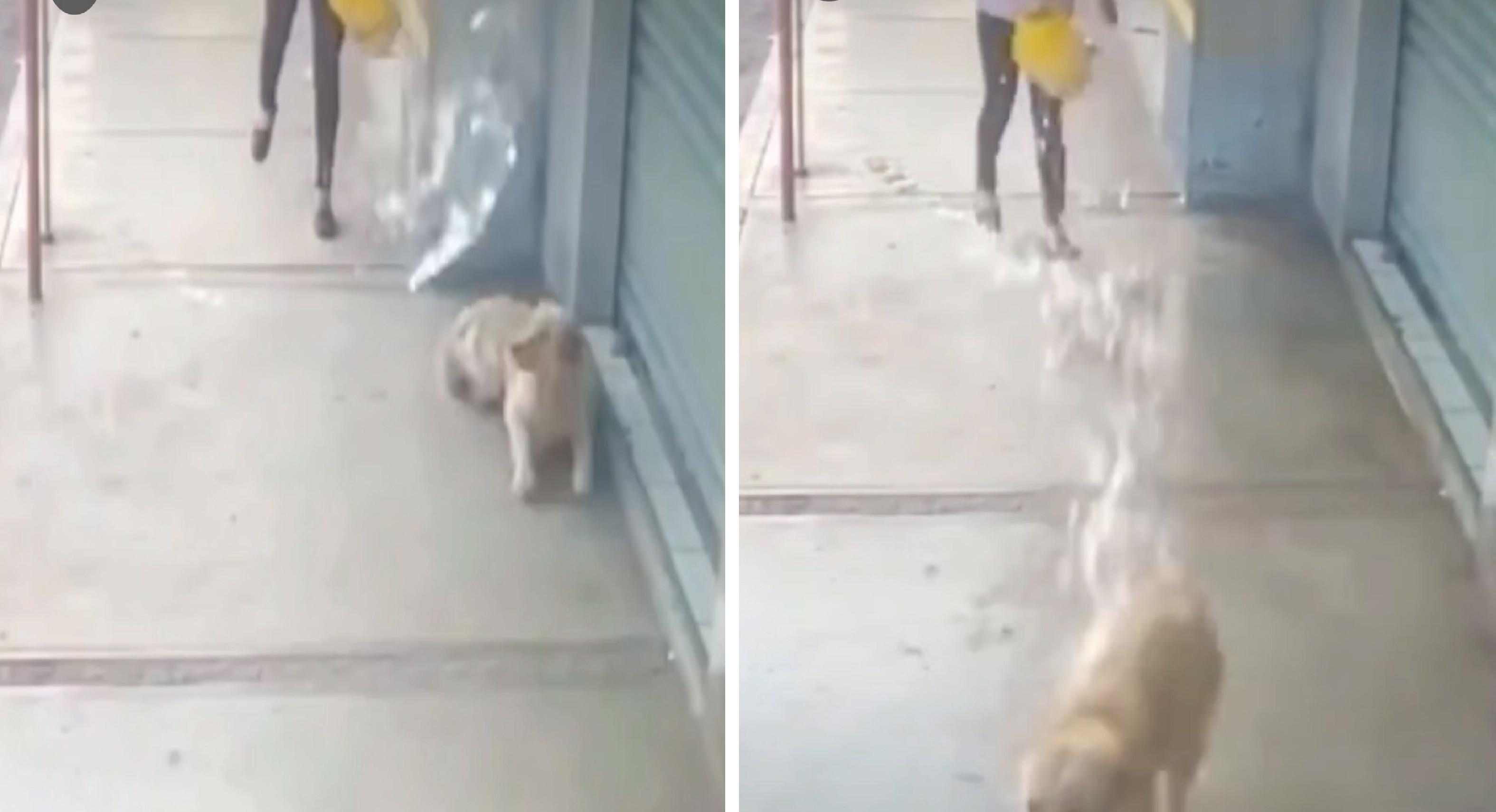 Buscan a responsable que moja perros en San Pablo Autopan
