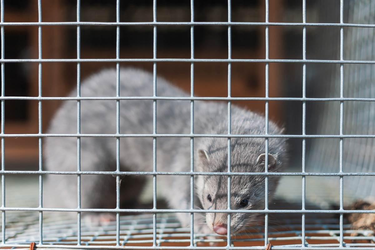 Rusia registró la primera vacuna contra el COVID-19 para animales: Carnivac-Cov