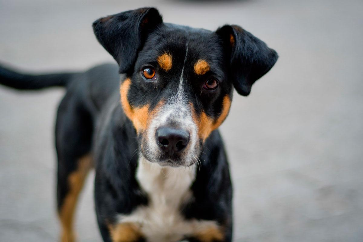 imagen de pequeño perro en la calle