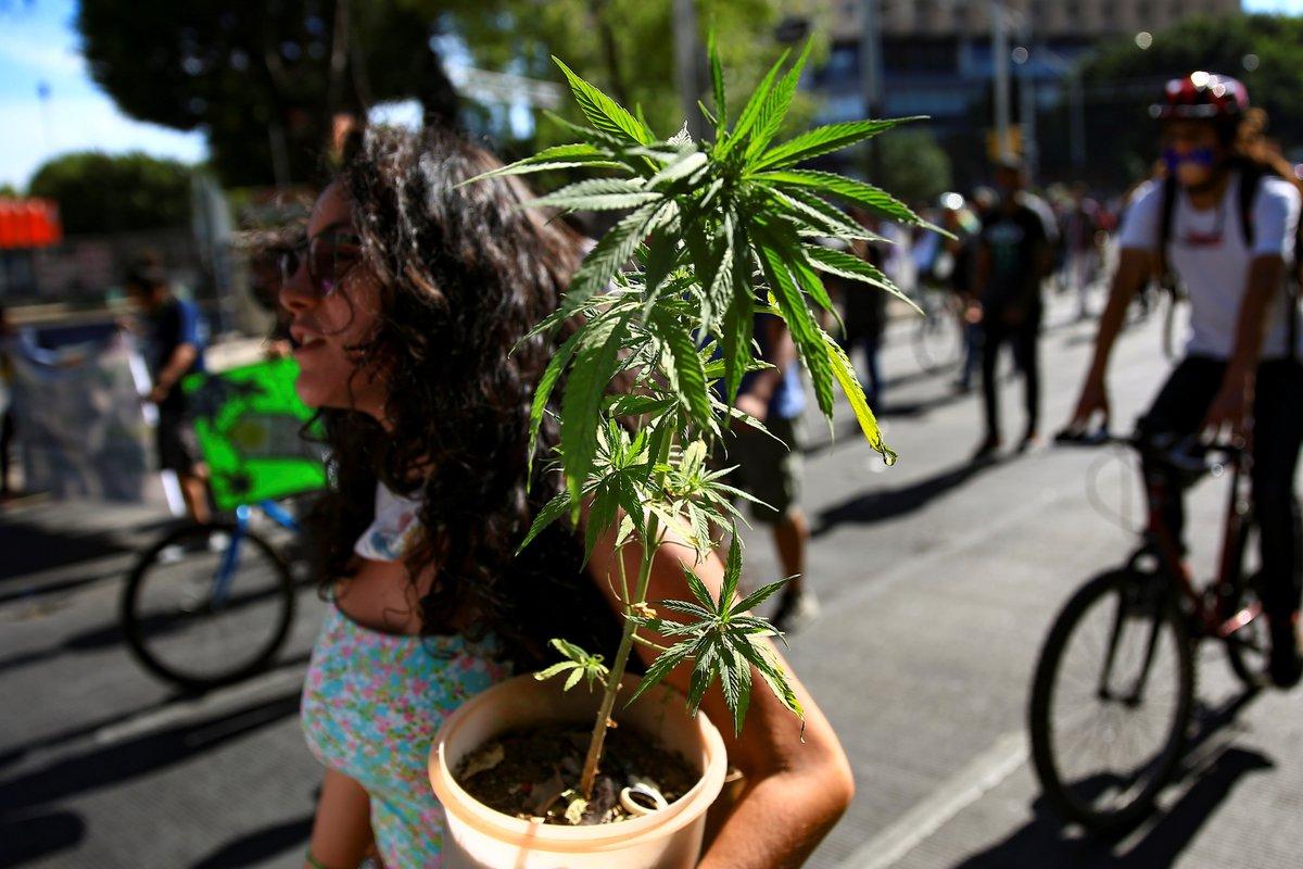 La tarde del segundo miércoles de marzo la Cámara de Diputados aprobó por mayoría de votos el uso lúdico de la marihuana en México.