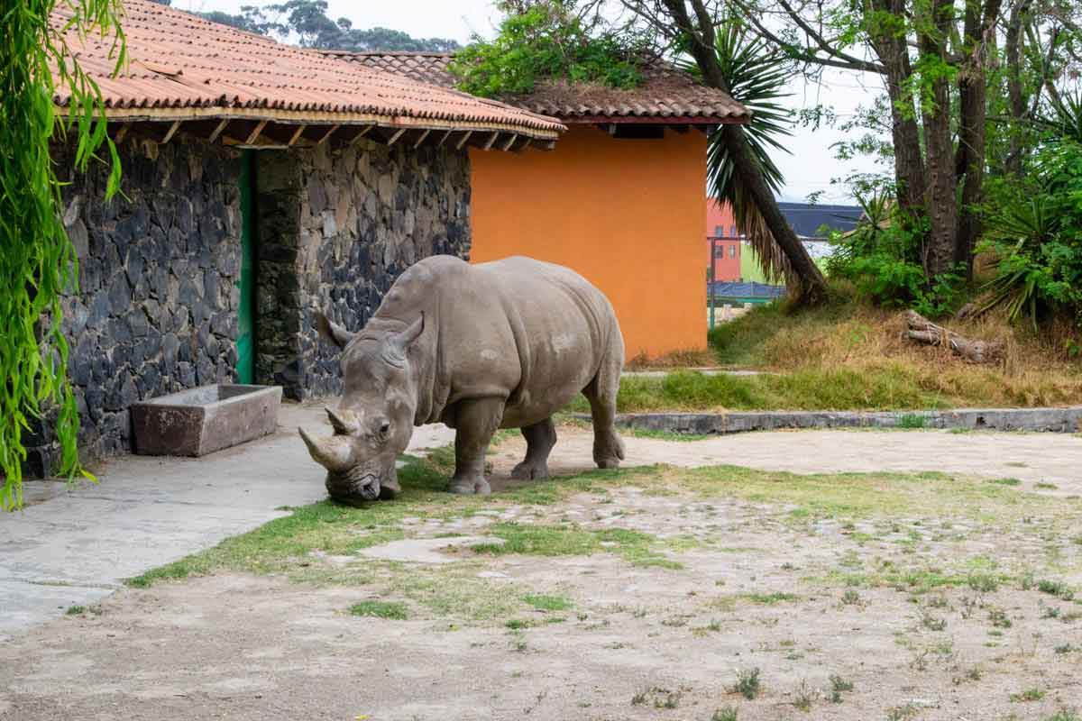 Zoológico de Zacango rinoceronte.