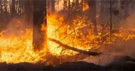 Incendios forestales en México registran su peor número tan solo por detrás del año 2012
